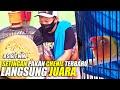 Setingan Pakan Lovebird Terbaru H Sigit Wmp Untuk Chenil Jadi Juara  Mp3 - Mp4 Download