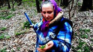 Лесные/лекарственные/съедобные травы. Сбор сморчков.
