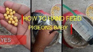 How to hand feed a baby pigeon (যে ভাবে কবুতরের বাচ্চাকে নিজ হাতে খাওয়াবেন।)