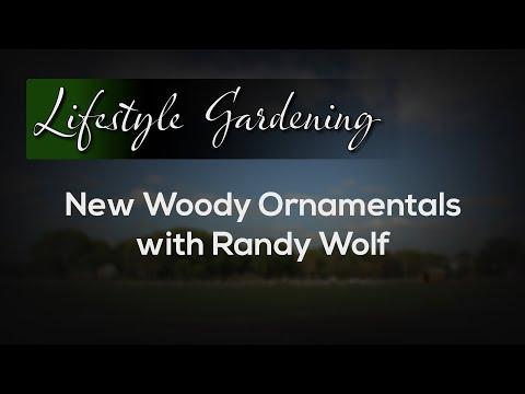 New Woody Ornamentals