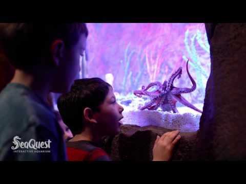 SeaQuest Interactive Aquarium Utah California Coastline