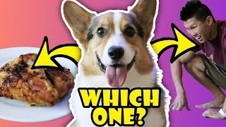 WILL MY DOG CHOOSE CHICKEN OVER ME? - Life Af...