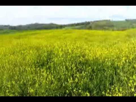اذان با صدای دریا دارابکلا - اذان با صدای آقای جواد ذبیحی - YouTube