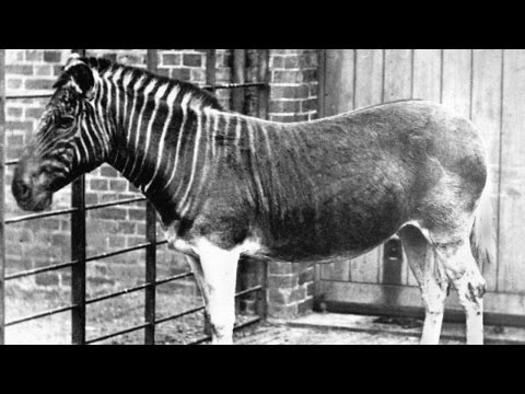10 Animals Humans Made Extinct