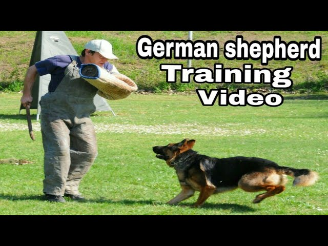 "German shepherd dog training video / Intelligent dogs / Popular dog breeds / ""Aryan Dog Club"""