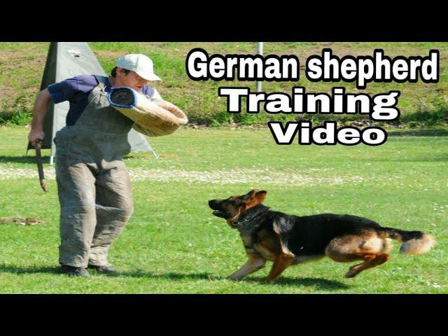 "German shepherd dog training video / Intelligent dogs / Popular dog breeds / ""Aryan Dog Club"""