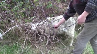 Die grösste fleischfressende Pflanze der Welt - fängt und verschlingt ganze Schafe!