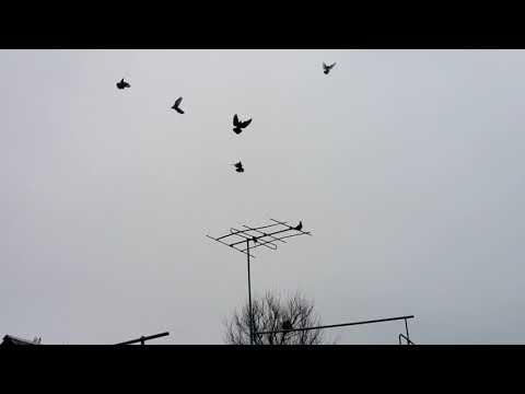 13.02 18.Очередной гон голубей