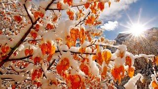 Осенний снег.  Виталий Данилюк.