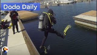 Cat Trapped Under Dock For 7 Days RESCUED | Best Animal Videos: The Dodo Daily