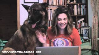 unLEASHED: German for Dogs