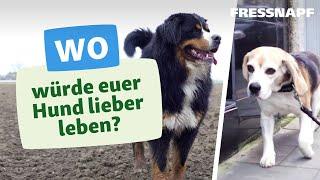 Was ist besser für Hunde? Leben auf dem Land oder in der Stadt?