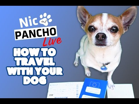 How To Travel With Your Dog - Nic and Pancho live #1