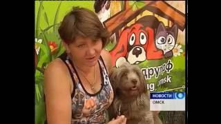 В Омске прошла встреча выпускников приюта для собак «Друг»