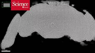 Snippet: Researchers image an entire fly brain in minute detail