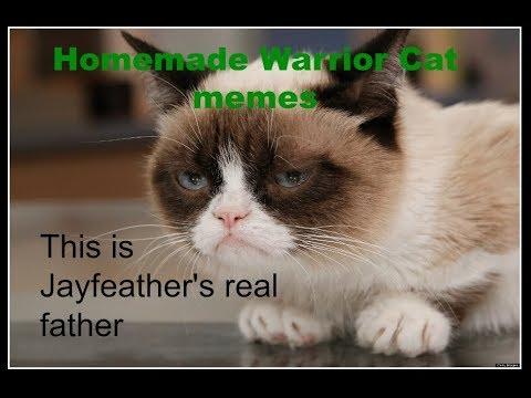 Homemade Warrior Cat M3m3s 1 Youtube