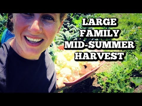 Come Join Us in the Garden | Large Family Harvest | Eating a 10 Month Old Cabbage
