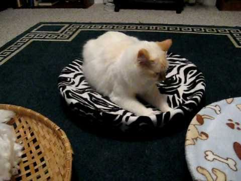 How to make an easy home made cat bed part 1 youtube for How to make a cat bed easy