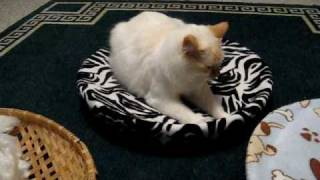 How To Make An Easy Home Made Cat Bed --  Part 1