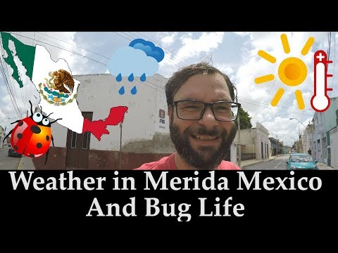 What Is The Weather Like In Merida Mexico? - What About Bugs?