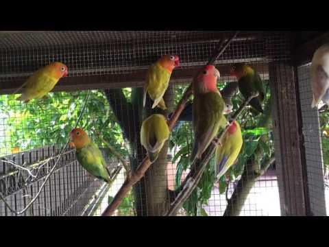 Good morning Lovebirds!! ❤️