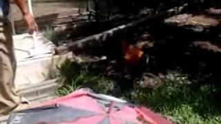 Ayam mengamuk (Pontianak, Indonesia)