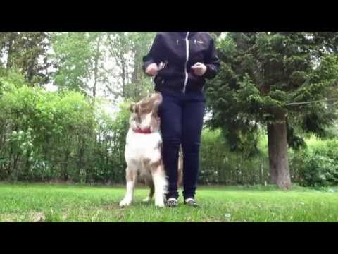 Teach your dog to do tricks in reverse!