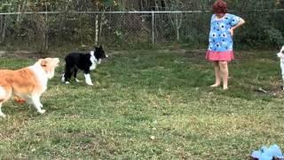 http://thedogliberator.com http://www.facebook.com/dogliberator htt...