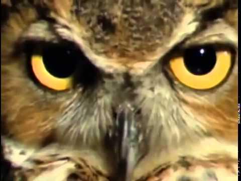 Extraordinary Birds   Nature Documentary