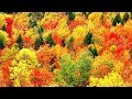 "Peaceful Music, Relaxing Music, Instrumental Music, ""Autumn Leaves"" by Tim Janis"
