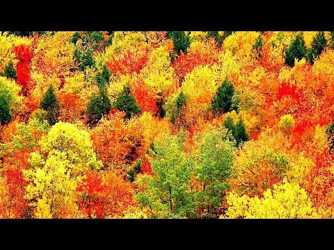 Peaceful Music, Relaxing Music, Instrumental Music, 'Autumn Leaves' by Tim Janis - Поисковик музыки mp3real.ru