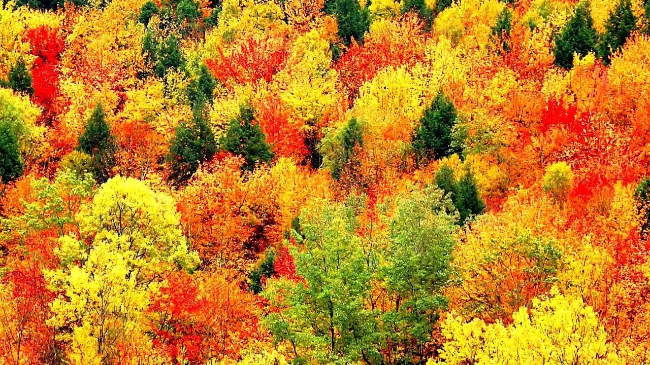 Autumn Falling Leaves Live Wallpaper Peaceful Music Relaxing Music Instrumental Music