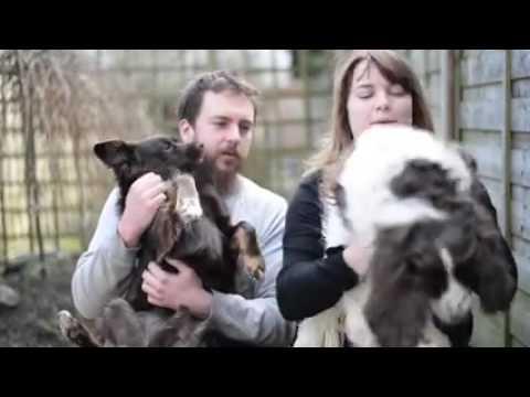 Hungary Hearts Dog Rescue - Bones' story