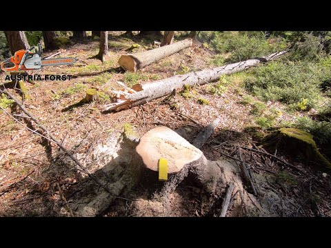 Aufarbeiten Von Schwierigen Sturmschäden Im Wald