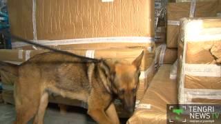 В Алматы впервые в мире служебных собак обучают поиску рогов сайги