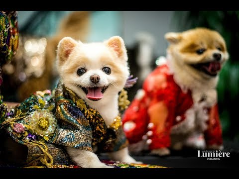 Anthony Rubio Lunar New Year, Year Of The Dog celebration in Beverly Hills