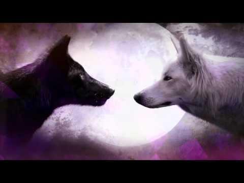 Картинки волки!!!!