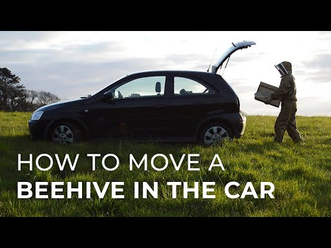How To Move A Beehive In The Car