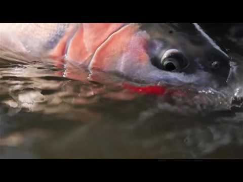 Skeena Fishing Technologies