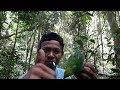 Pikat Burung Cucak Rante Di Hutan Menggunkan Suara Jitu  Mp3 - Mp4 Download