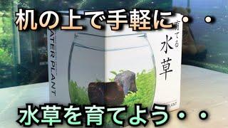 【アクアリウム】初心者でも大丈夫!机の上で水草を育てよう!【水草水槽】【パールグラス】