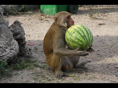 Web камеры Зоопарки мира -