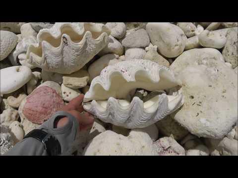 Giant clam shells and jellyfish on the beach, Christmas Island, Kiribati.