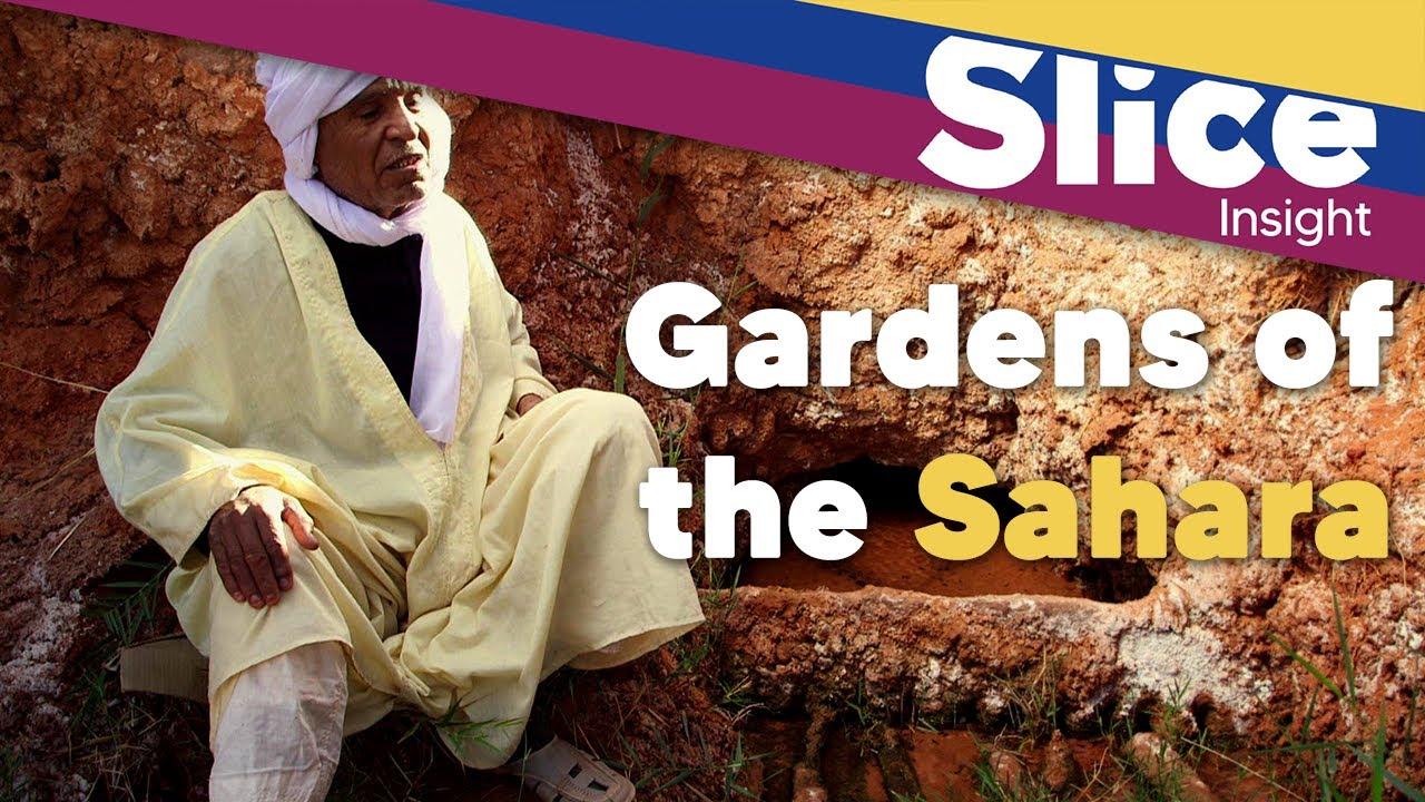 Sahara's gardening secret | SLICE