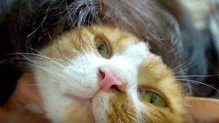 愛猫といる幸せをテーマにしようと、500本目の動画は決めていました。今...