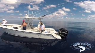 Drone, Dolphins, Queen Snapper and spear fishing! RESF & Makin