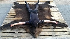 Karhun nahan parkkaus kotikonstein/ Tanning of bear skin
