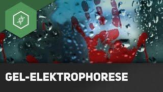 Wie funktioniert DNA-Analyse? - Gel-Elektrophorese einfach erklärt!