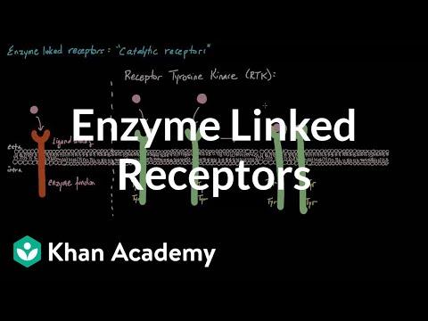Enzyme Linked Receptors | Nervous system physiology | NCLEX-RN | Khan Academy