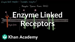 Enzyme Linked Receptors | Nervous system physiology | NCLEX-RN | Khan Academy thumbnail